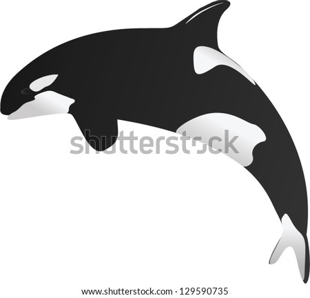 One Illustration of Killer whale
