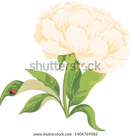 one peony with green leaves and