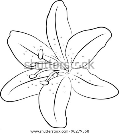Picture Lily Flower on One Simple Lily Flowers   Freehand On A White Background  Vector