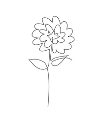 One single line drawing beauty aster flower vector illustration. Minimal tropical floral style, love romantic concept for poster, wall decor print. Modern continuous line graphic draw design