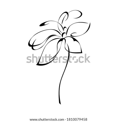 one stylized blooming flower on a short stalk without leaves in black lines on a white background Photo stock ©