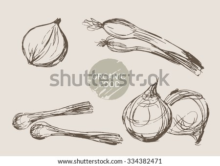 onion hand draw sketch, vector