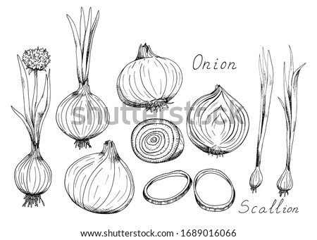 onion whole and sliced