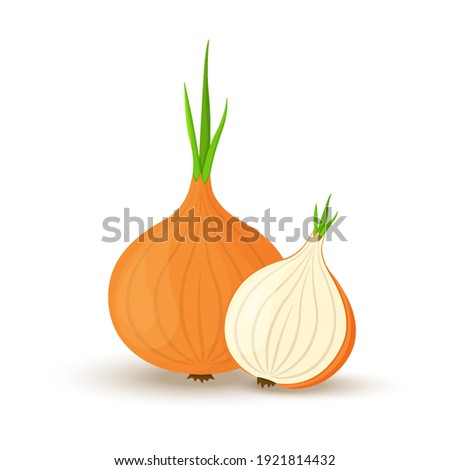 Onion. Whole onion and cut onion. Flat simple design. Vector illustration of organic farm fresh vegetables. Isolated on white background. Stock photo ©
