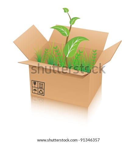 open recycle shipping box with green plant