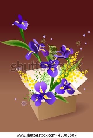 Opened box full of irises and mimosa