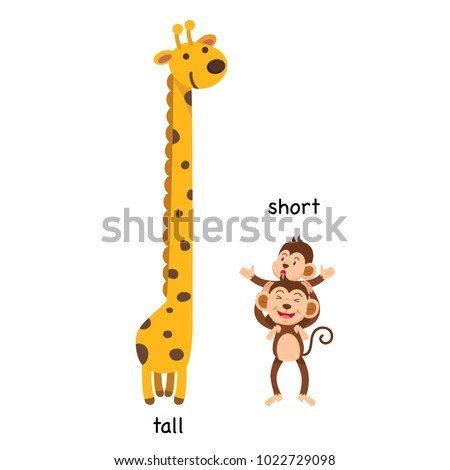 Opposite  tall and short vector illustration
