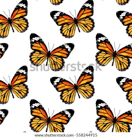orange butterfly monarch on a