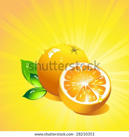 Orange citrus fruit. Vector