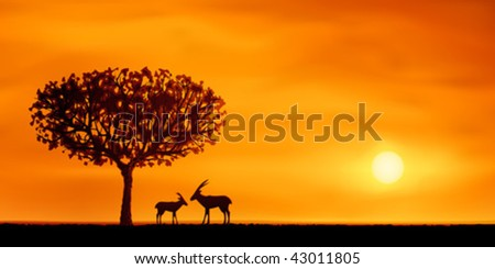 orange evening savanna scenery