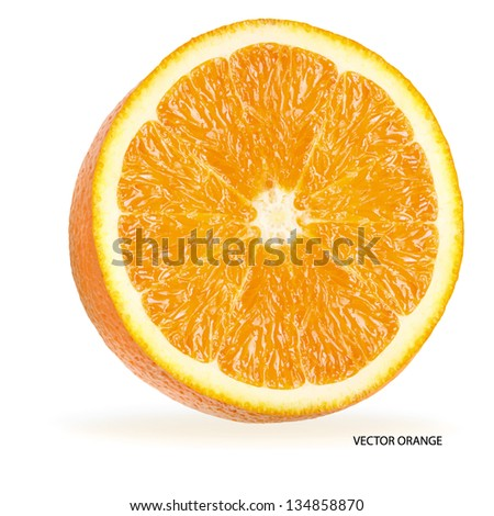 Orange fruit  isolated on white background. Vector illustration.
