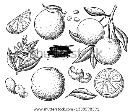 Orange fruit vector drawing. Summer food engraved  illustration Isolated hand drawn slice, whole and half orange, branch, blooming flower, leaves. Botanical sketch of citrus for label, juice packaging