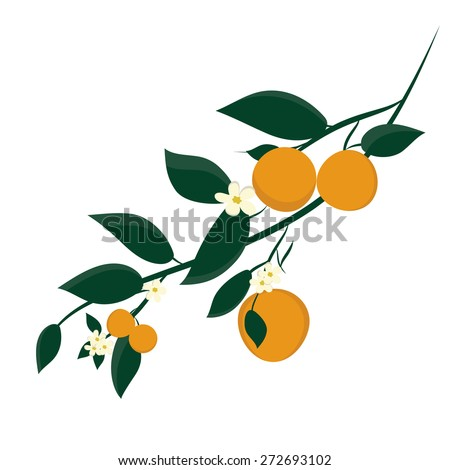 orange fruits on branches