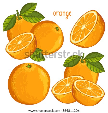 orange isolated  orange vector