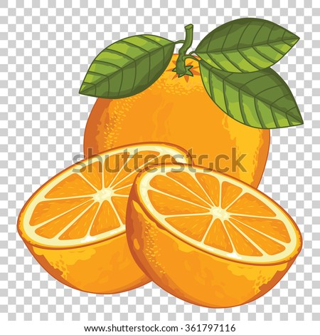 orange isolated  vector orange