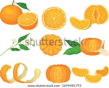 Orange Mandarin Fruit Unpeeled and Skinless with Segments Vector Set