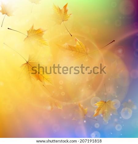 orange maple leaves autumn