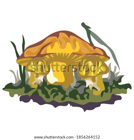 orange mushroom or amanita