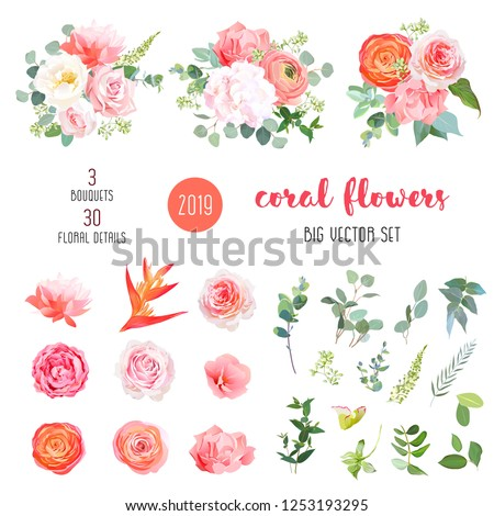 Orange ranunculus, pink rose, hydrangea, coral carnation, garden flowers, greenery and decorative plants big vector set. Coral trendy color collection. Elements are isolated and editable