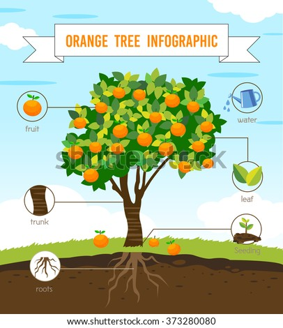orange tree info graphic vector