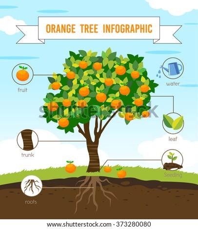 orange tree info graphic vector