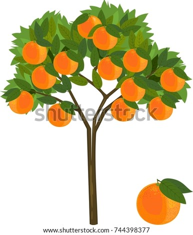 orange tree with green leaves