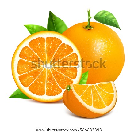 Shutterstock Orange whole and slices of oranges. Vector illustration of oranges. Fully editable handmade mesh.