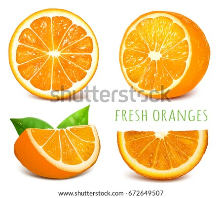 Oranges.Vector illustration.
