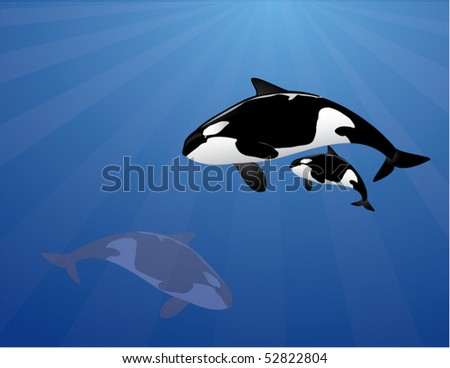 orca family in the ocean - stock vector