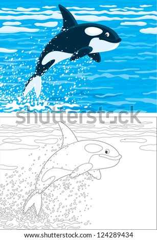 orca leaping out of the water in a polar sea, color and outline illustrations