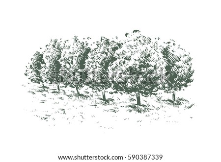orchard trees drawing