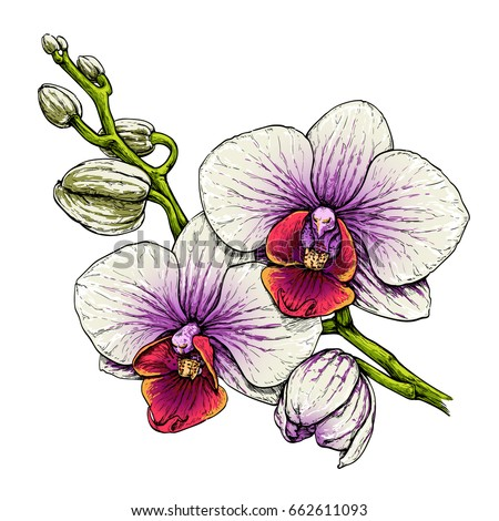 Orchid flower branch. Hand drawn vector illustration isolated on white.