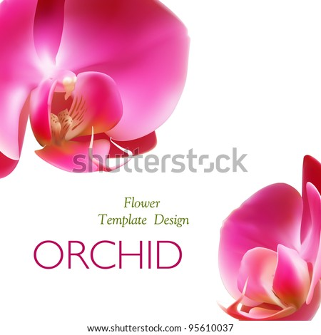 Orchid flower, template vector design for brochure. Phalaenopsis blossom
