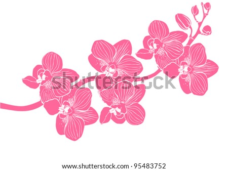 orchid flower vector background