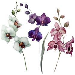 orchid, flower, watercolor