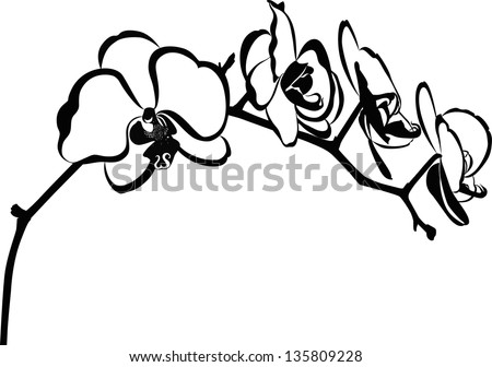 Line Drawing Of Flowers Clipart : White orchid download free vector art stock graphics & images