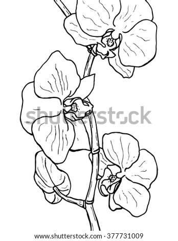 orchid hand drawn artistically