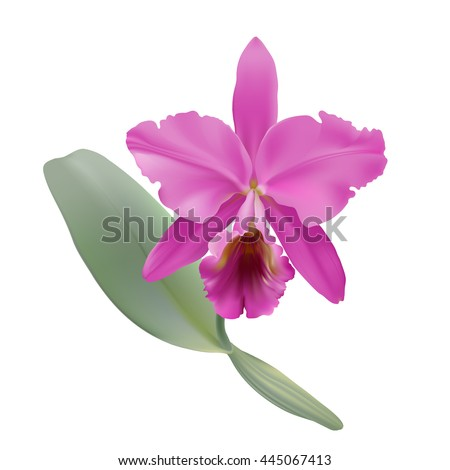 orchid  hand drawn vector