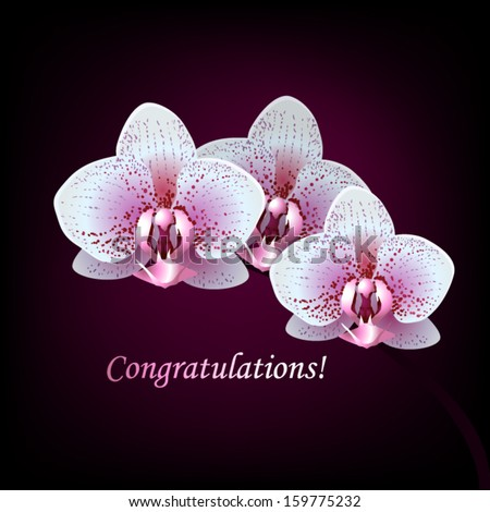 orchid on dark background. congratulations