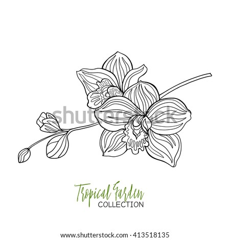 orchid tropical plant vector