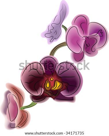 Orchidea Phalaenopsis vector - stock vector