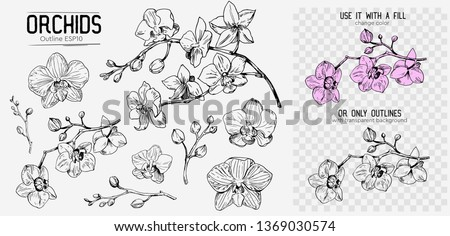 Orchids sketch. Hand drawn outline converted to vector. Isolated