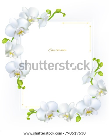 Orchids. White flowers. Tropical plants. Floral background. Square frame.