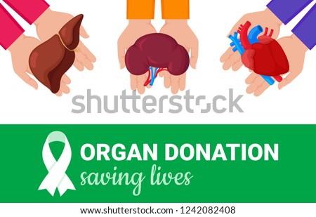 Organ donation concept. Flat vector colorful illustration. Internal human organs. Organ donation green ribbon. National donor day. Organ donation saving lives.