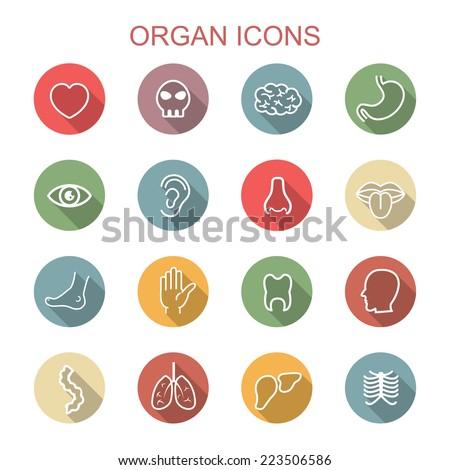 organ long shadow icons  flat