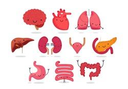 Organ vector illustration