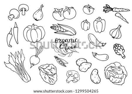 Organic food design template. Fresh vegetables. Hand drawn illustration vegetables. Eco organic food. Great for label, design menu, recipes, poster, packaging design #1299504265