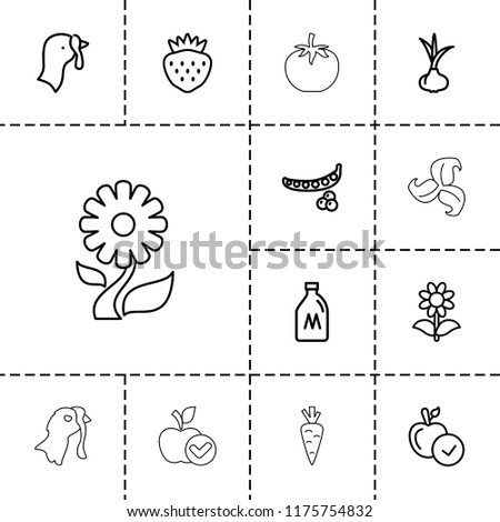 organic icon collection of 13
