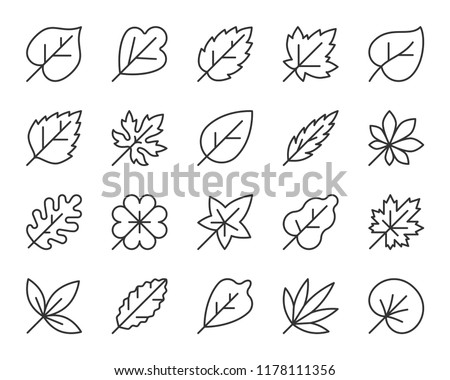 Organic Leaf thin line icons set. Outline web sign kit season foliage. Autumn Garden linear icon nature spices, maple, oak. Simple organic leaf black contour symbol isolated white. Vector Illustration