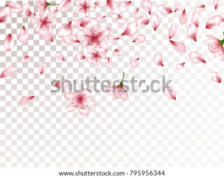 Oriental blossom elements, apple or japanese sakura petals flying and flowers falling vector illustration. Spring petals pink flower vector elements flying, bloom confetti on transparent background.